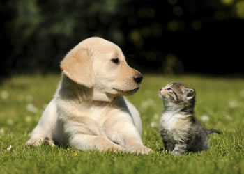 A dog and a kitten looking at one another